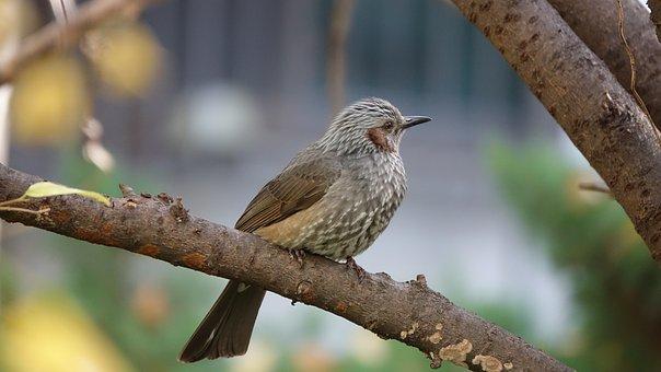 Sparrow, New, Nature, Kit Digital
