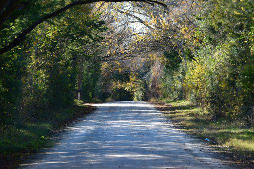 Path, Trees, Road, Gravel Road, Tree Lined Road, Shade
