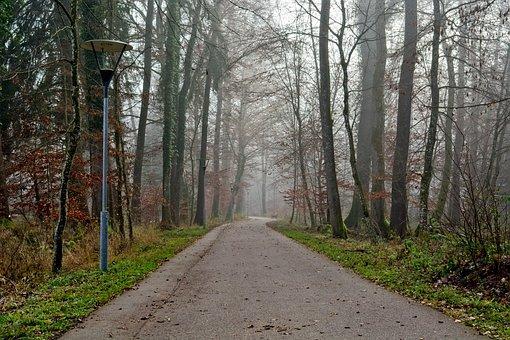 Fog, Forest, Trees, Away, Road, Secret, Mood