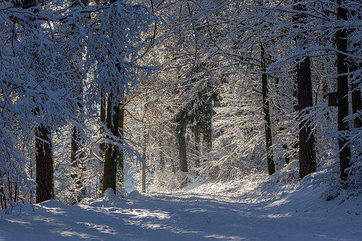 Winter, Forest, Nature, Snow, Trees, Landscape, Wintry