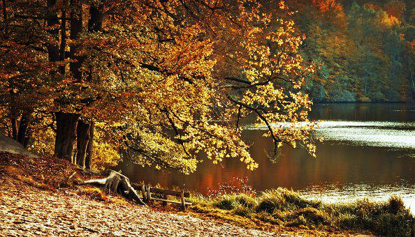 Autumn, Autumn Landscape, Landscape, Lake, Waters