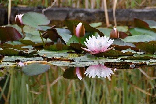 Flora, Nature, Flower, Flowers, Summer, White