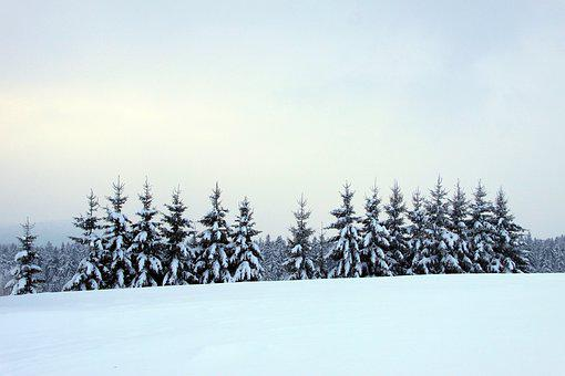 Bavarian Forest, Winter, Forest, Trees, Spruce, Snow