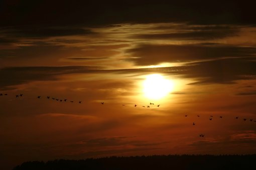 Sun, Geese, Nature, Birds, Sky, Orange, Scenic, Flying