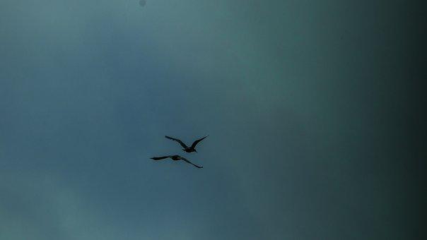 Cloudiness, Nature, Birds, Gloomy, Landscape, Fog