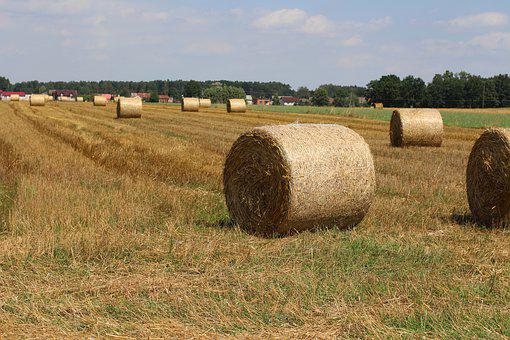 Harvest, Field, Straw, Agriculture