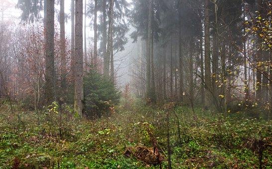 Forest, Fog, Trees, Landscape, Secret, Mood, Mysterious