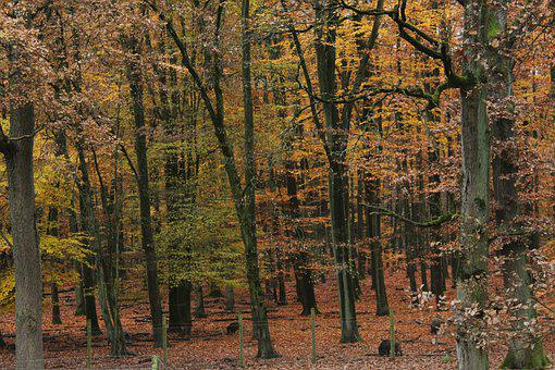Forest, Autumn, Colorful, Leaves, Color, Trees