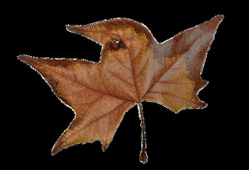Autumn, Leaf, Colorful, Forest, Foliage
