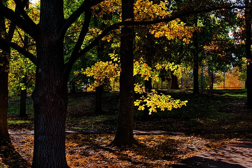 Fall, Autumn, Tree, Forest, Colorful, Landscape, Trees