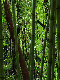 Bamboo, Forest, Greenery
