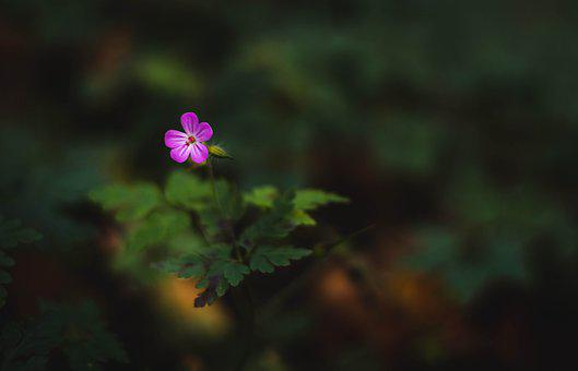 Flower, Plant, Forest, Pink, Foliage, Background, Green