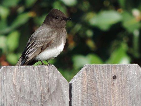 Little Bird, Outside, Home, Wild