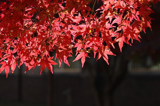 Autumn Leaves, Leaves, The Leaves, Deciduous, Wood