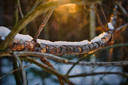 Branch, Tree, Dead Wood, Morning Sun, Nature, Forest