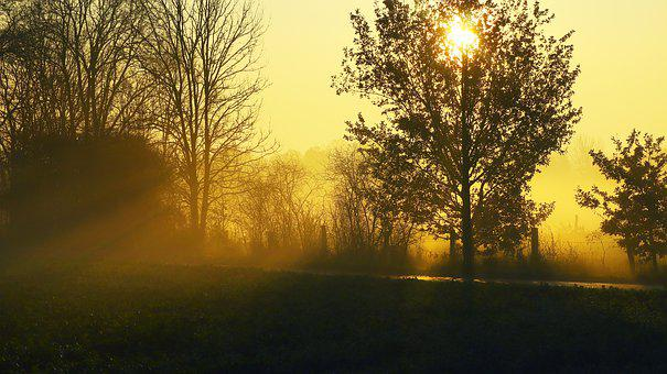Sunrise, Autumn, Mood, Forest, Nature, Landscape, Haze