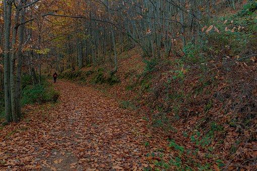 Autumn, Leaves, Nature, Landscape, Tree