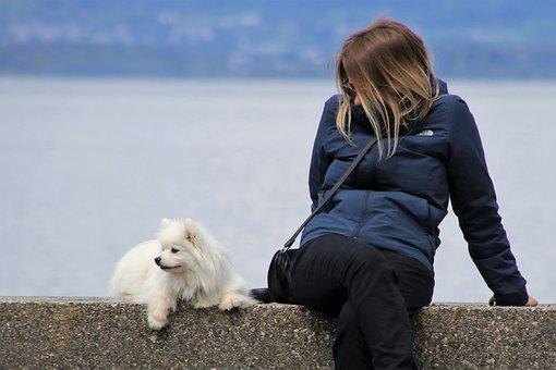 Girl, White Dog, Musings, Looks, Spitz, Sitting, Total