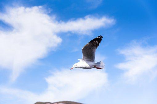 Bird, Seagull, Wings, Natural, Travel, Tourism, Flight