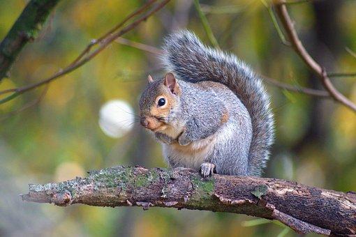 Beautiful Squirrel, Autumn, Leaves, Nature, Squirrel