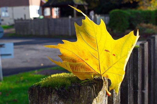 Just A Leaf, Leaves, Forest, Nature, Break, Leaf, Plant