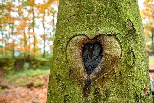 Heart, Tree, Carved, Romance, Bark