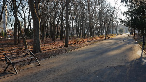 Autumn, Late Autumn, Park, Sun, Shadow