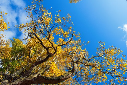 Beautiful Day, Forest, Sky, Blue, Nature, Day, Smile