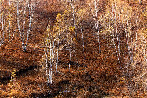 Autumn, The Scenery, Golden Yellow, Natural, Leaf