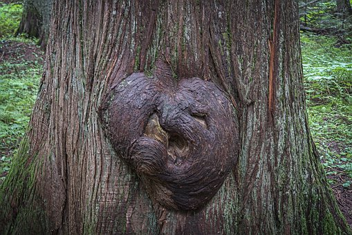 Tree, Burl, Gnarly, Knots, Growth, Twisted, Texture
