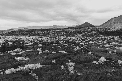 Volcanoes, Canary Islands, The Iron, Vegetation