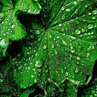 Leaf, Raindrop, Beaded, Wet, Drip, Rain, Veins