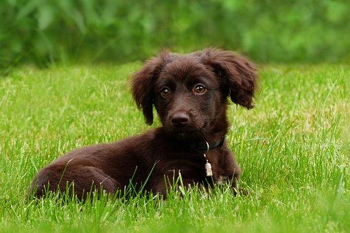 Animal, Dog, Family Dog, Canidae, Young, Playful