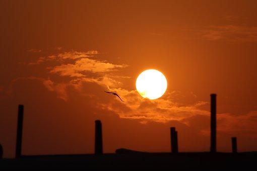 Sunset, Bird, Nature, Sky, Clouds, Sun