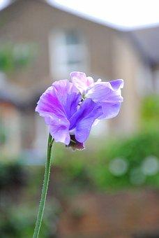 Flower, Colorful, Summer, Flora, Plant