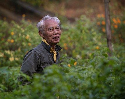 Farm Man, Thai Farmer, Farming