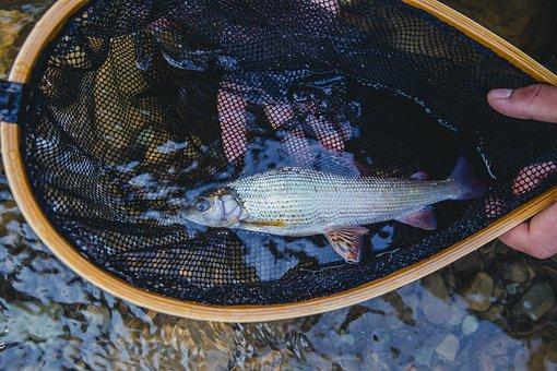Flayfishing, Fishing, Fisherman, Man