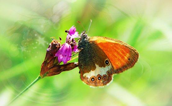 Strzępotek Perełkowiec, Tom, Butterfly Day, Flower