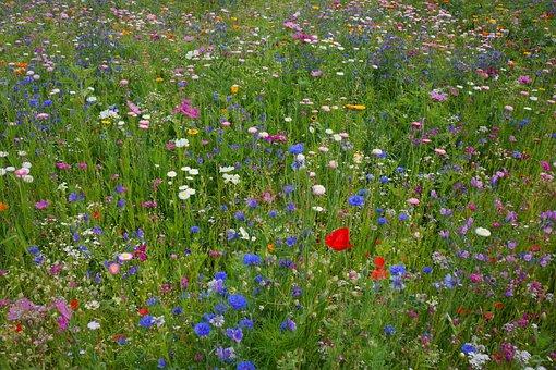 Meadow, Spring, Easter, Summer Flowers, Flower Meadow