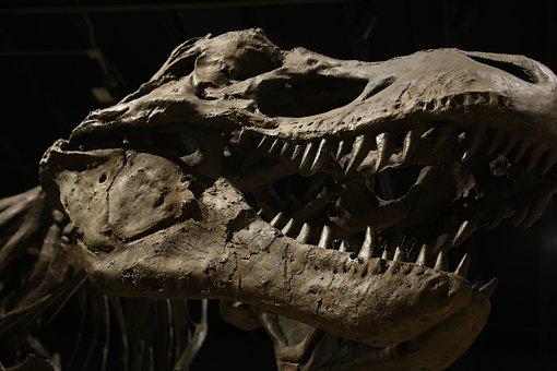 Dinosaur, Museum, Jurassic, T-rex, Nature, Skeleton