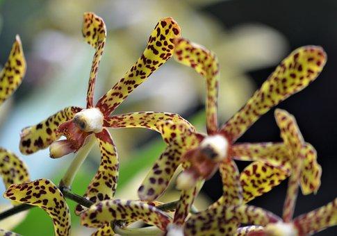 Flower, Orchid, Blossom, Nature, Exotic, Flora, Petal