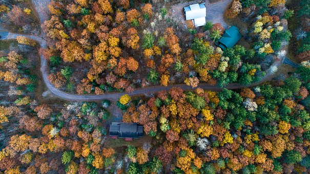 Road, View From Above Photos, Tree Photo, Photo, Forest