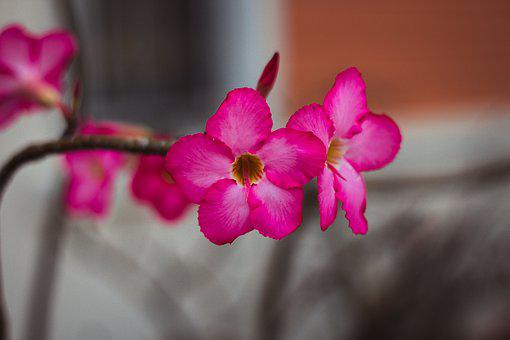 Invited To Visit, Flowers, Shrub, Nature, Flower, Pink
