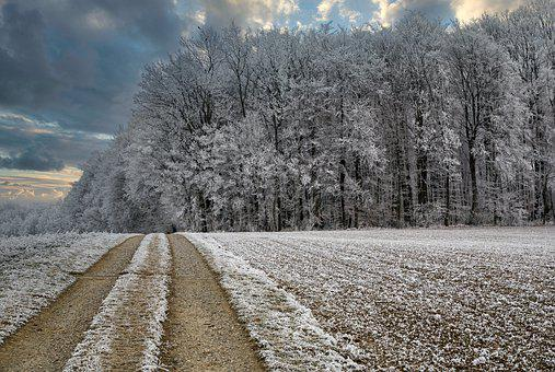 Winter, Cold, Winter's Day, Wintry, Trees