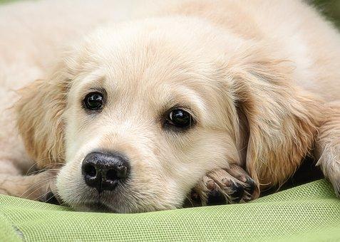 Dog, Mammal, Animal, Animal World, Pet