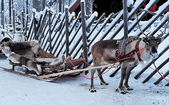 Lapland, Reindeer, Snow, Parish, Dec, Icy, Animals