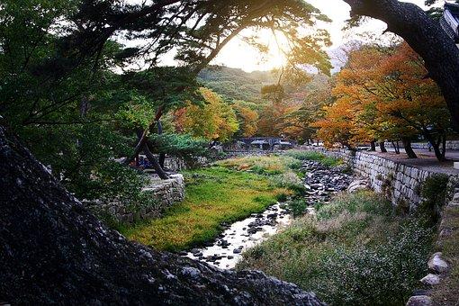 Beomeosa Temple, Creek, Nature, Glow, Autumn Leaves