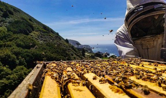Bees, Big Sur, Honey, Hive, Ocean, Mountains, Highway 1