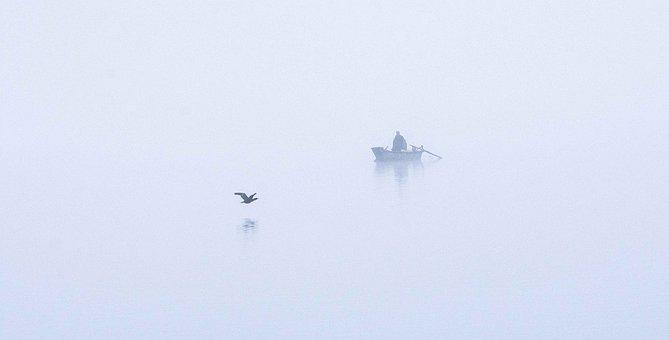 Bird, Lake, Boat, Nature, Wildlife, Flight, Wing, Water