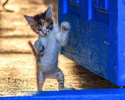 Kitten, Sweet, Cat, Dancing, Jumping